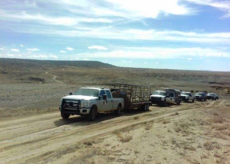 Hopi Rangers impounding sheep on disputed Hopi-Navajo land. Photo courtesy of Black Mesa Indigenous Support