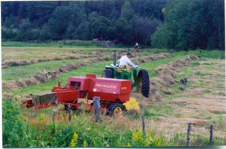 cutting hay183